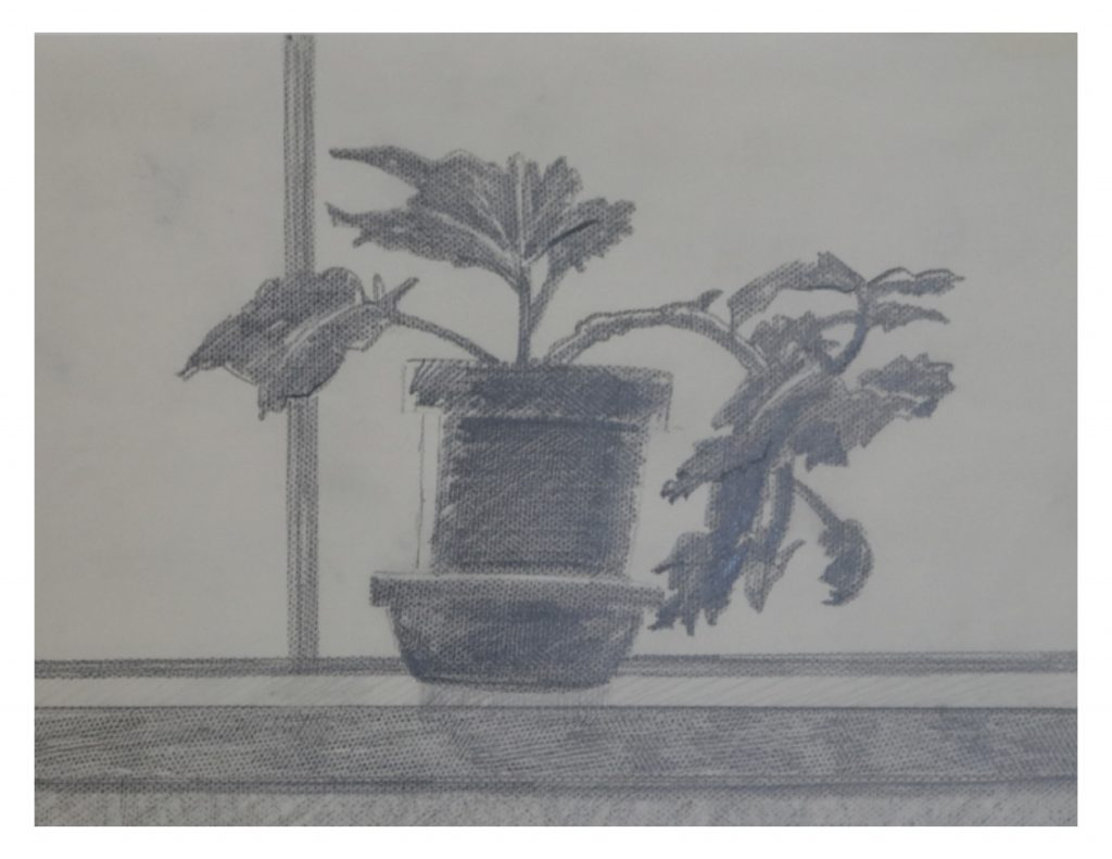Detail, Geranium, Oct 11, 1986, pencil on paper, 21.5 x 27.9 cm