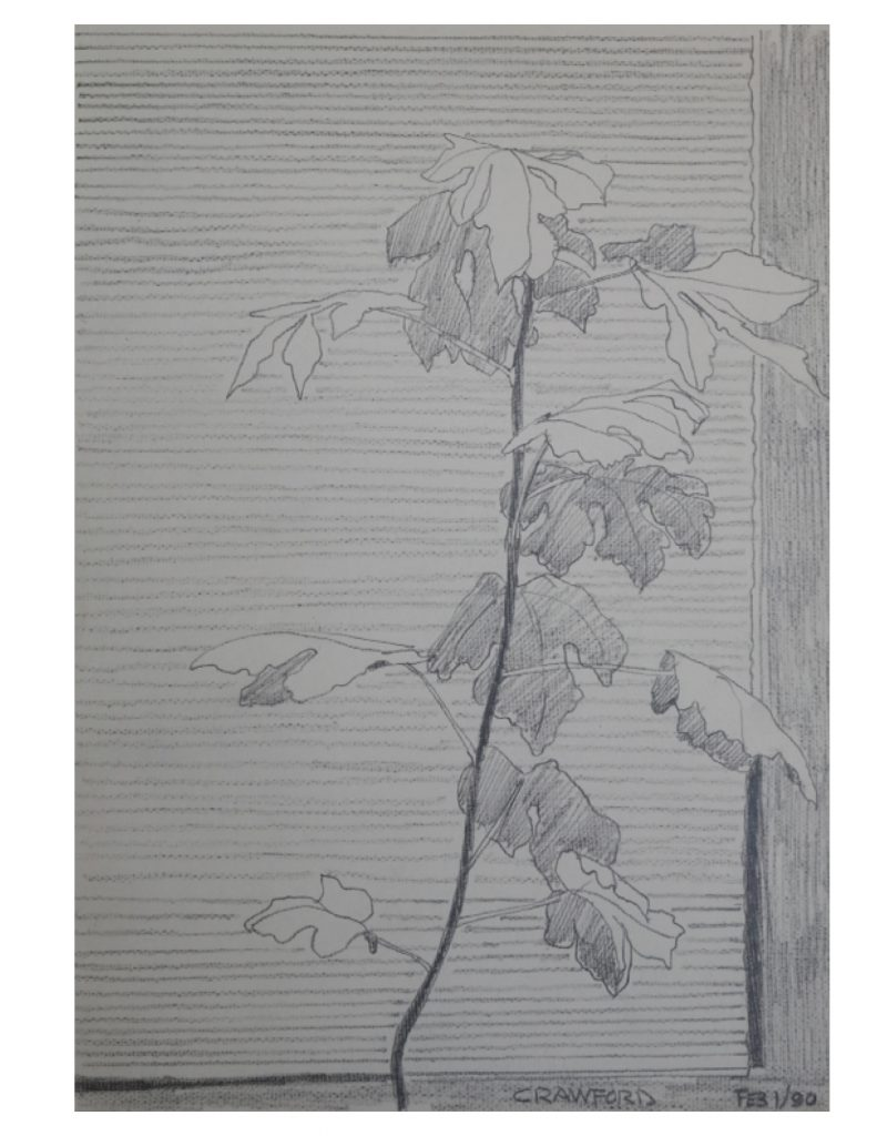 Venetian plant life - fig, Feb 1, 1990, pencil on paper, 21.5 x 27.9 cm