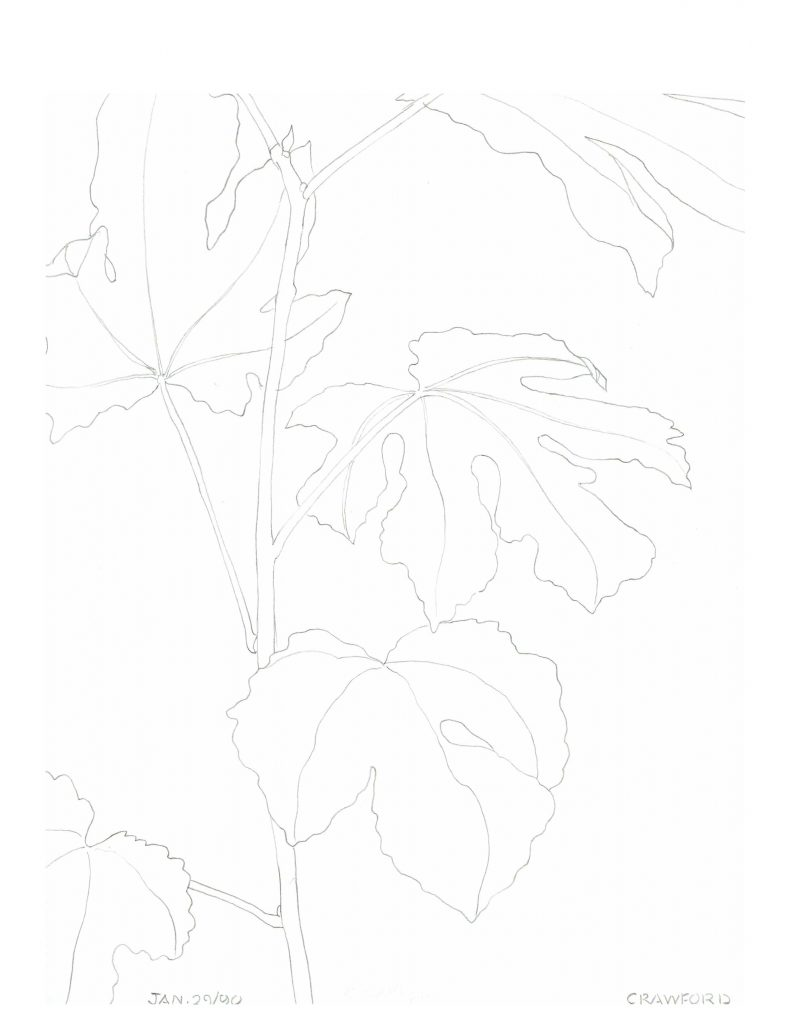 Fig plant drawing 1, Jan 24, 1990, pencil on paper, 21.5 cm x 28 cm