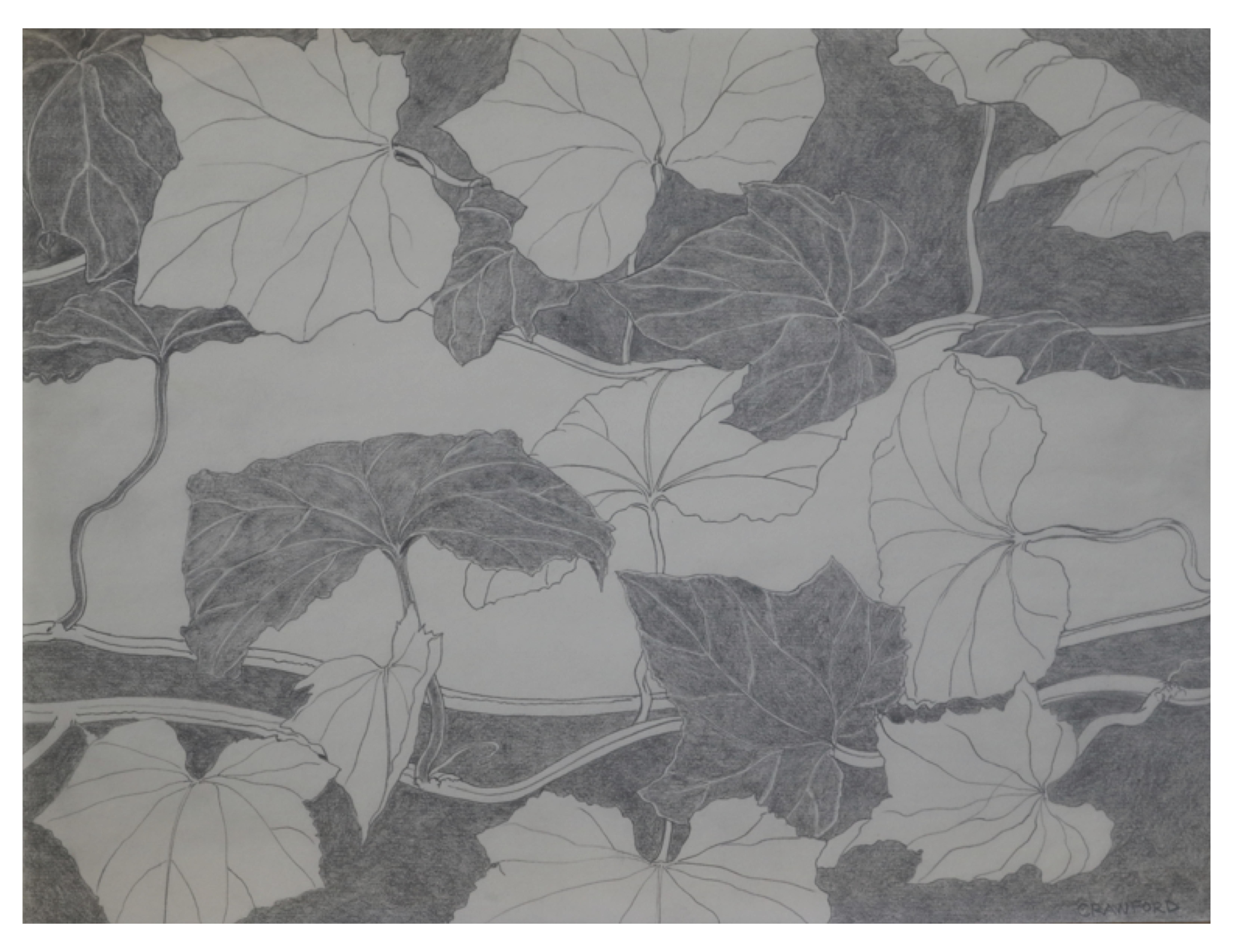 Ivy, Oct 4, 1986, pencil on paper, 27.9 cm x 21.2 cm