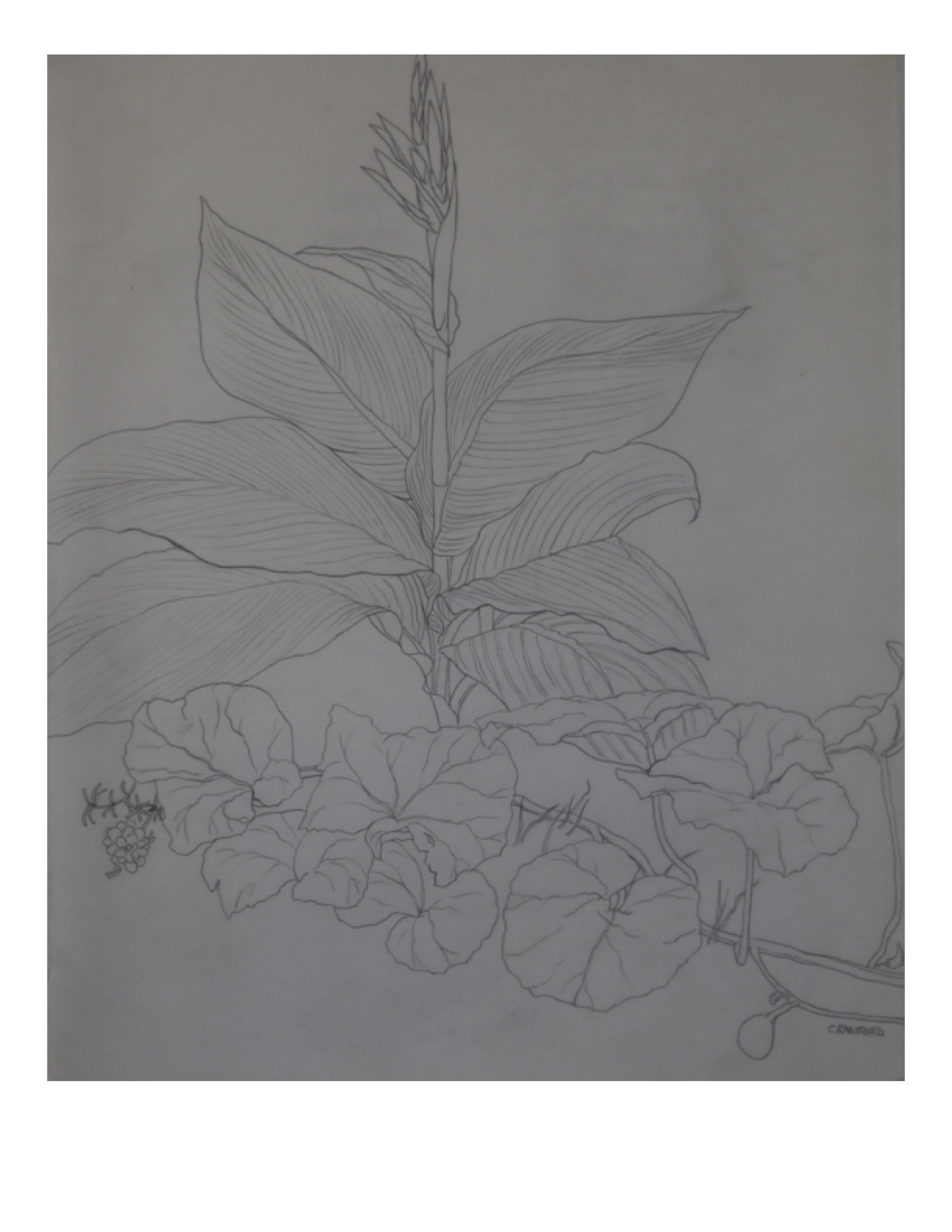 Lahore garden, July 12, 1987, pencil on paper, 28 cm x 35.5 cm