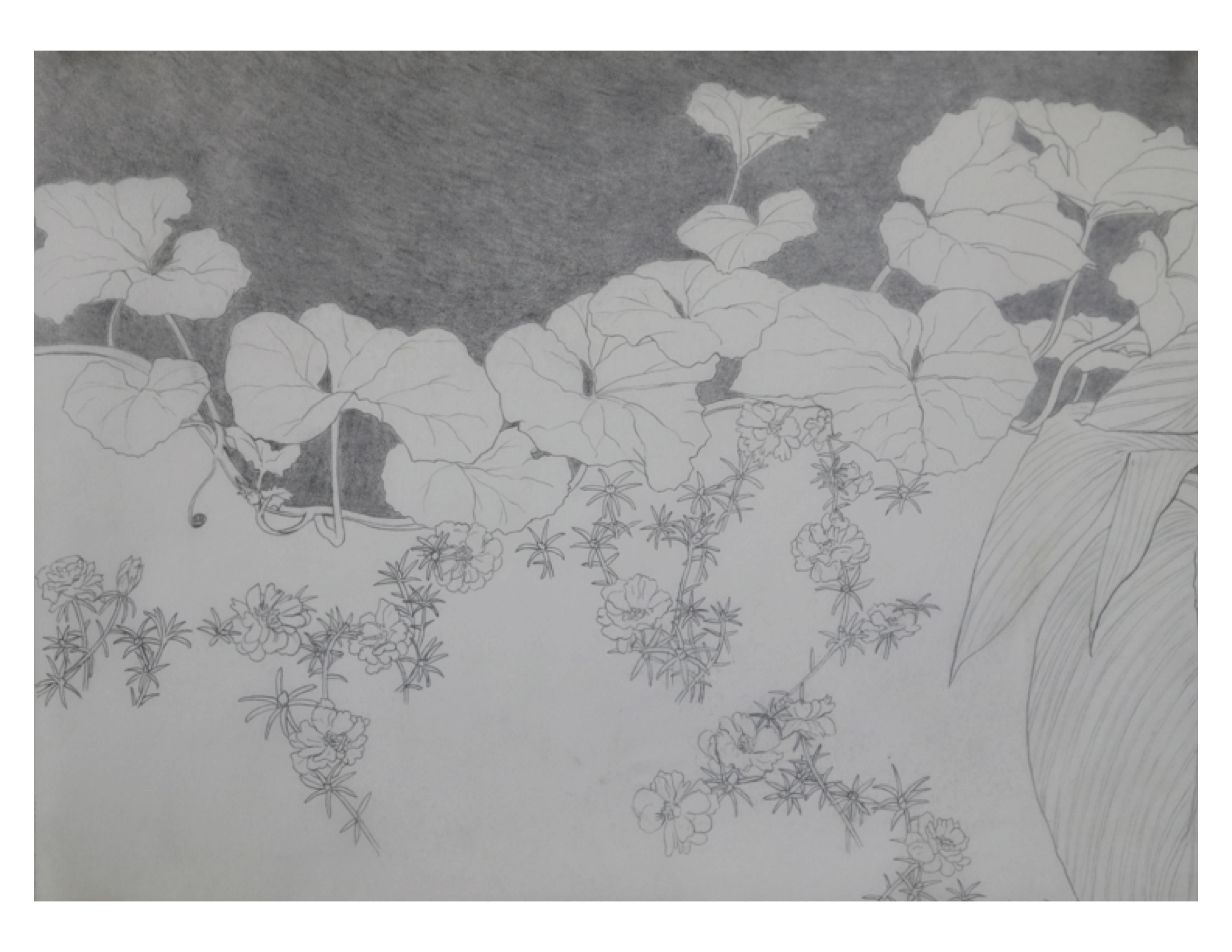 Lahore garden detail, July 12, 1987, pencil on paper, 35.5 cm x 28 cm