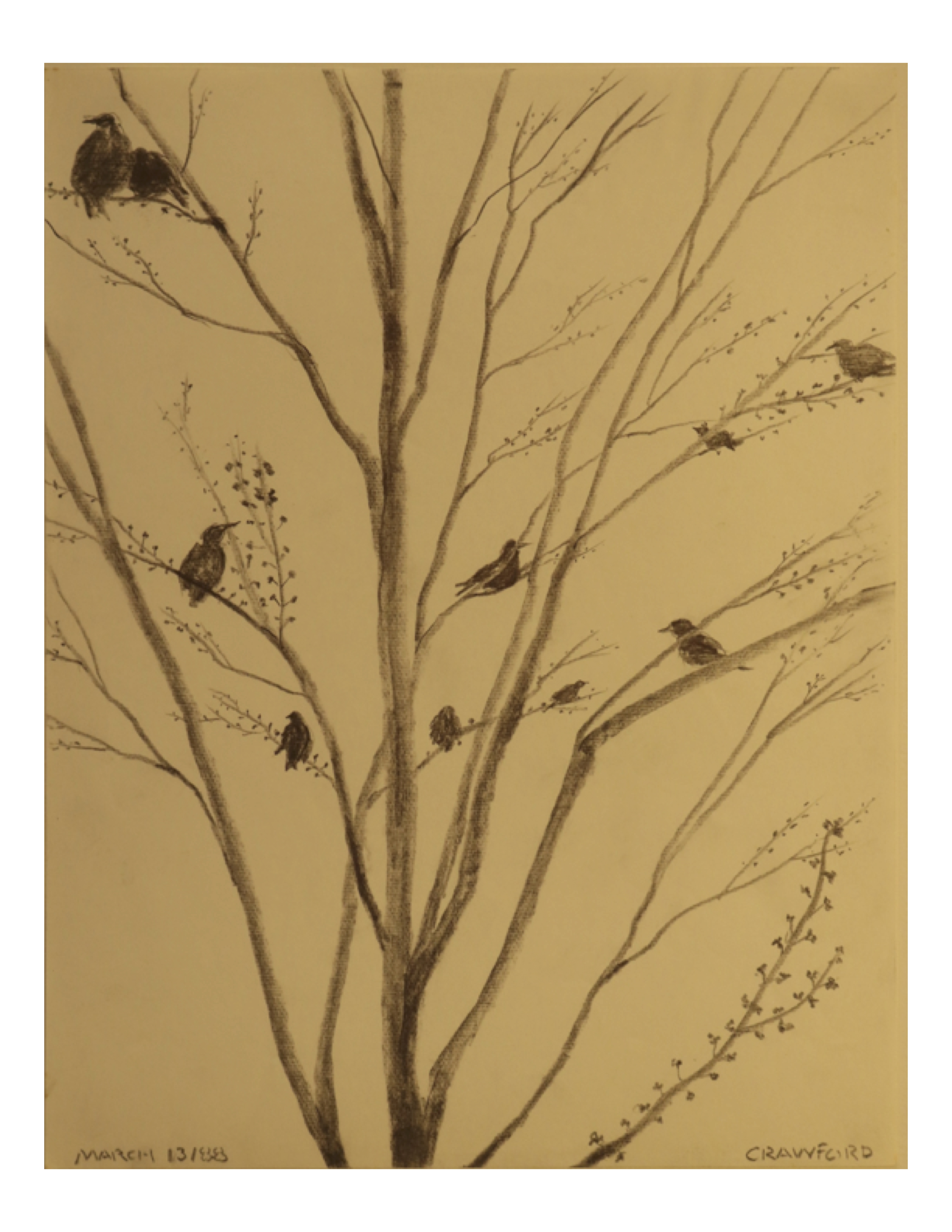 Birds in a tree - winter, March 13, 1988, pencil on paper, 21.5 cm x 28 cm